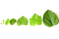 Diversas hojas del árbol Fotos de archivo