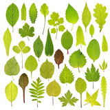 Diversas hojas del verde aisladas en el fondo blanco Foto de archivo libre de regalías