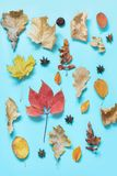Diversas hojas y calabaza caidas en azul dinámico Composición del otoño como modelo Visión superior imagen de archivo libre de regalías