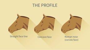 Diversas líneas de la cara de un caballo con la descripción Fotografía de archivo