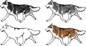 Diversas opciones del color para los perros esquimales ilustración del vector