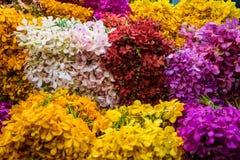 Diversas orquídeas coloridas originais Fotografia de Stock Royalty Free