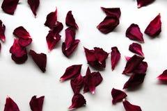 Diversas pétalas cor-de-rosa estão encontrando-se na tabela branca Imagem de Stock Royalty Free
