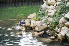 Diversas piedras marrones mojadas, dos palomas, lago, paisaje del invierno en Italia foto de archivo