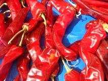 Diversas pimentas brilhantes encarnados Imagens de Stock Royalty Free