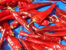 Diversas pimentas brilhantes encarnados Imagem de Stock