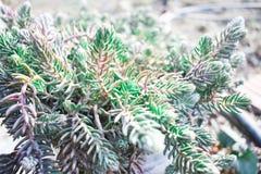Diversas plantas de la naturaleza fotografía de archivo libre de regalías