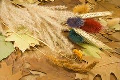 Diversas plantas secadas Imagen de archivo libre de regalías