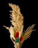 Diversas plantas secadas Imagenes de archivo