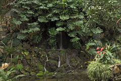 Diversas plantas tropicales en la casa de palma grande del Palmengarten, Francfort Alemania Foto de archivo libre de regalías