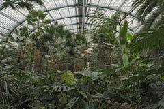 Diversas plantas tropicales en la casa de palma grande del Palmengarten, Francfort Alemania Foto de archivo