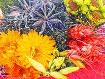 Diversas plantas y flores secadas y coloreadas para la decoración casera Fotos de archivo libres de regalías