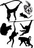 Diversas siluetas del mono Imagen de archivo