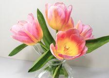 Diversas tulipas delicadas que são cor-de-rosa com toques do amarelo fotografia de stock