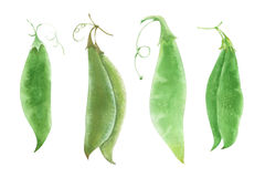 Diversas vainas de la pera del verde de la acuarela Imagenes de archivo