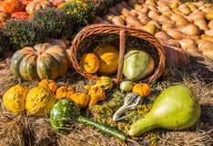 Diversas variedades de calabazas Imagen de archivo
