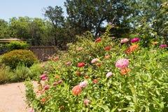 Diversas variedades de crescimento de flores em uma área pequena Fotos de Stock