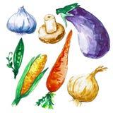 Diversas verduras aisladas en el fondo blanco Verduras de la acuarela Los contornos se dibujan en tinta Stock de ilustración