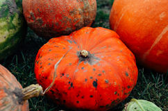 Diverse assortment of pumpkins on a wooden background Royalty Free Stock Images