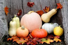 Diverse assortment of pumpkins. Autumn harvest stock photos