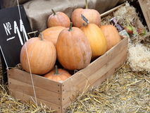 Diverse assortment of pumpkins in a wooden chest. Stock Photography