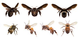 Diverse bijen op witte achtergrond royalty-vrije stock foto