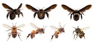 Diverse bijen op witte achtergrond stock afbeelding