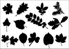 Diverse bladeren Stock Afbeeldingen
