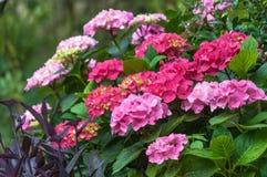 Diverse bloemen van geranium Stock Afbeeldingen
