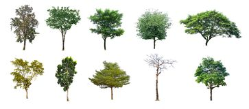 Diverse bomen van Thailand, inzameling plaatsen nr 02 geïsoleerd op witte achtergrond royalty-vrije stock fotografie