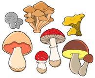 Diverse collection de mycètes Photo stock