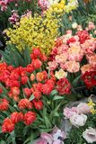 A diverse collection of tulips.Different shapes and colors of flowers royalty free stock photography