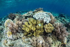 Diverse Coral Reef Royalty Free Stock Images