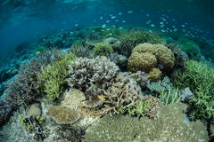 Diverse Coral Reef Stock Image