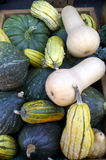Diverse courge Photos stock