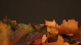 Diverse de herfstbladeren tegen een donkere achtergrond royalty-vrije stock afbeelding