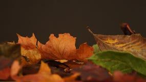 Diverse de herfstbladeren tegen een donkere achtergrond stock foto's