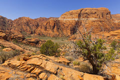 Diverse desert landscape in Utah, United States. Royalty Free Stock Image
