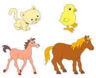 Diverse djur Arkivbild