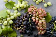 Diverse druivengewassen op grijze steenachtergrond Royalty-vrije Stock Afbeeldingen