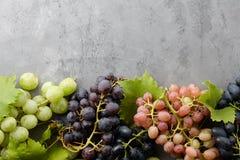 Diverse druivengewassen op grijze steenachtergrond Stock Foto's