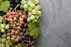 Diverse druivengewassen op grijze steenachtergrond Royalty-vrije Stock Fotografie