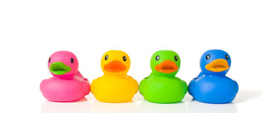 Diverse ducks Stock Photography