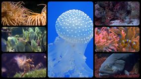 Diverse fishes collage stock video