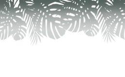 Diverse frontière tropicale d'ombre de feuilles, d'isolement sur le fond blanc photo libre de droits
