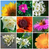Diverse garden flowers Royalty Free Stock Images