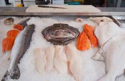 Diverse glace des poissons o Photographie stock
