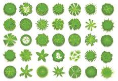 Diverse groene bomen, struiken en struiken, hoogste mening voor het plan van het landschapsontwerp Reeks vectordieillustraties, o royalty-vrije illustratie