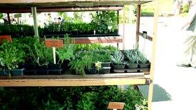 Diverse groenten voor verkoop bij de markt stock videobeelden