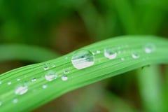 Diverse grootte van glasheldere waterdruppeltjes op het trillende groene blad in ochtendzonlicht royalty-vrije stock foto